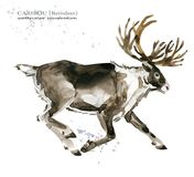 Caribou. reindeer watercolor illustration. Wild Lapland animals Stock Photo