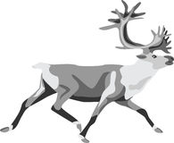 Caribou. Running reindeer or caribou - greyscale illustration Royalty Free Stock Photography