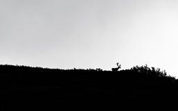 Caribou silhouette royalty free stock photo