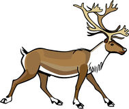Caribou Trotting. Illustration a male caribou trotting or walking Stock Photo