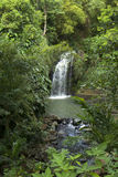 The Caribs. Grenada island. Waterfall. Grenada is the spice plantations nutmeg, cinnamon, cloves, ginger, vanilla and cocoa Royalty Free Stock Image