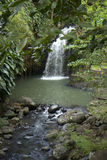 The Caribs. Grenada island. Waterfall. Grenada is the spice plantations nutmeg, cinnamon, cloves, ginger, vanilla and cocoa Stock Images