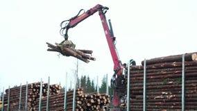 Caricamento degli alberi abbattuti video d archivio