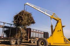 Caricamento del raccolto del camion del trattore Fotografia Stock