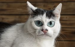 Caricature. black and white cat Stock Photography