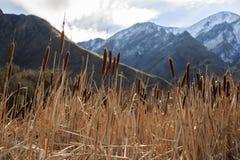 Carice e montagna nel lago Moke, Nuova Zelanda Fotografia Stock Libera da Diritti