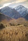 Carice e montagna nel lago Moke, Queenstown, Nuova Zelanda Immagine Stock