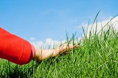 Caricia de la hierba Fotos de archivo