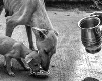 caridad Foto de archivo