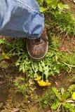 Carimbe remove ervas daninhas para fora Fotos de Stock