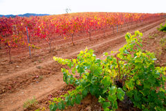 Carinena and Paniza vineyards in autumn red Zaragoza Spain Stock Photo