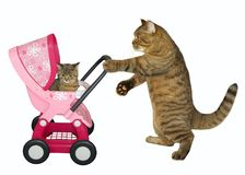 Cat pushes stroller with kitten stock image