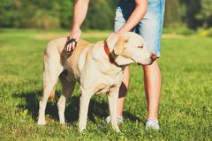 Caring for dog Stock Photography