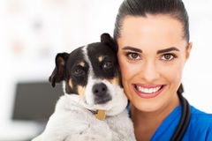 Vet and dog Stock Image