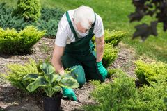 Caring about garden royalty free stock photo