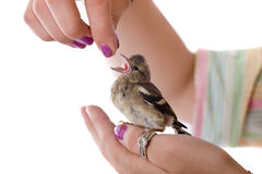 In caring hands Royalty Free Stock Image