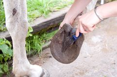 Caring for a horse. Stock Images