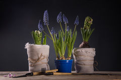 Caring for houseplants Royalty Free Stock Photos