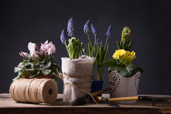 Caring for houseplants Stock Photos
