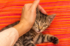 Caring for my pet Stock Photography