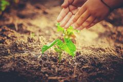 Caring for a new life. Watering young plants. The child`s hands. Selective focus stock photo