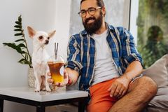 Caring owner giving some ice coffee for his funny cute dog. Ice coffee. Caring dark-haired beaming owner giving some ice coffee for his funny cute little dog stock photography