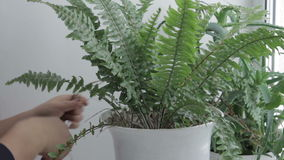 Caring for potted flowers stock video