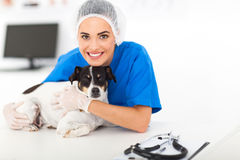 Veterinarian with dog Royalty Free Stock Images