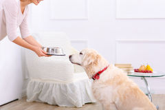 Caring woman feeding the dog. Enjoy yourself. Close up of bowl with food in hands of pleasant caring woman holding it while going to feed her dog Stock Photo