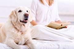 Caring woman lying on bed with her dog royalty free stock photography