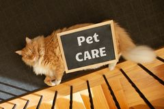 Caring for your pets topic depicted with ginger cat. royalty free stock photography