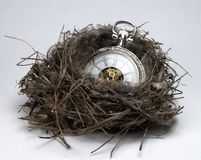 Caring your time. Care time pocket watch and natural nest royalty free stock image