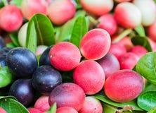 Carissa carandas fruit Royalty Free Stock Photo