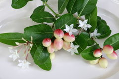 Carissa carandas L Flowers and leaves of mango, yew, lime, boiled on a palatable white dish. Carissa carandas L Ripe mango, yew, lime, booing, colorful stock photos
