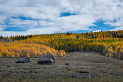 Carlingue abandonnée près d'Aspen Trees dans le Colorado Image stock