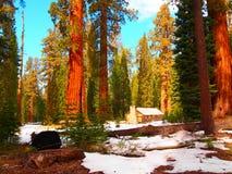 Carlingue de rondin en parc national de Yosemite Images libres de droits