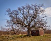 Carlingue et arbre d'observateurs de phare photo libre de droits