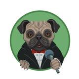 Carlino del cane con un cavo del microfono fotografie stock