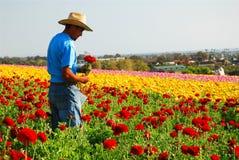 Carlsbad blommafält royaltyfria foton