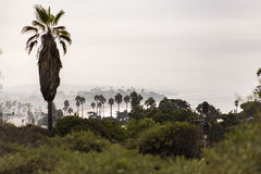 Carlsbad Palm Trees. Coastal views taken in and around Carlsbad California Stock Images