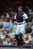 Carlton Fisk Stock Photography
