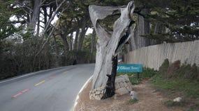 CARMEL, КАЛИФОРНИЯ, СОЕДИНЕННЫЕ ШТАТЫ - 6-ОЕ ОКТЯБРЯ 2014: Пункт Pescadero на приводе 17 миль, как дерево призрака Оно получает,  стоковое изображение rf