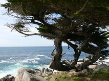 Carmel coast Royalty Free Stock Images