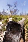Burnt Tree Stock Photos