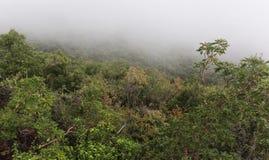 Carmel Halna mgła w Północnym Izrael zdjęcia stock