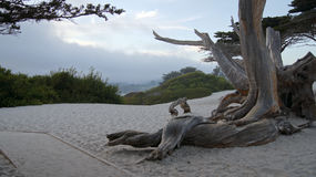 CARMEL, KALIFORNIA STANY ZJEDNOCZONE, OCT, - 7, 2014: Biel plaża z cyprysem wzdłuż autostrady Żadny i drzewem 1, usa Obrazy Stock