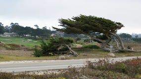 CARMEL, KALIFORNIA STANY ZJEDNOCZONE, OCT, - 6, 2014: piękni domy przy otoczakiem Wyrzucać na brzeg pole golfowe który jest częśc obraz stock