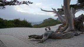 CARMEL, KALIFORNIEN, VEREINIGTE STAATEN - 7. OKTOBER 2014: Weißer Strand mit einem Baum und Zypresse entlang Landstraßen-NO1, USA Stockbilder