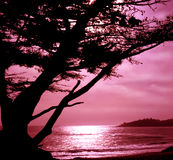 Carmel, la Californie Photos libres de droits