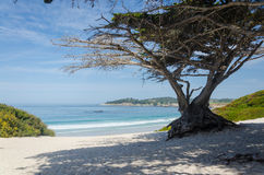 Carmel River State Beach Image stock